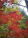 紅葉の旅へ